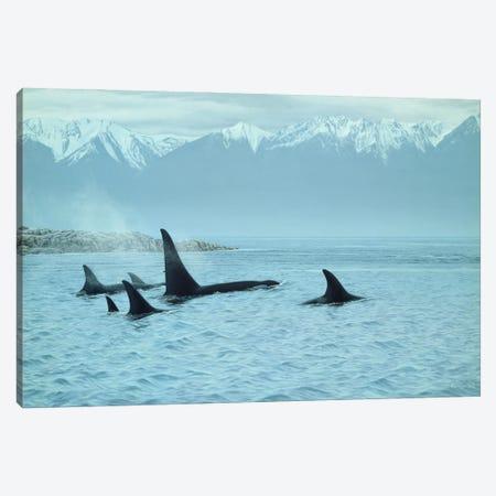 Silent Passage- Orcas Canvas Print #9251} by Ron Parker Canvas Wall Art