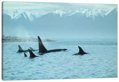 Silent Passage- Orcas Canvas Art Print