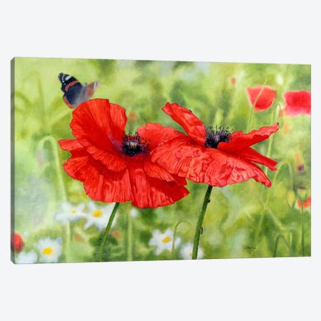 Poppies And Butterfly Canvas Print #9285} by Bill Makinson Canvas Art