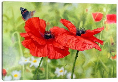 Poppies And Butterfly Canvas Art Print