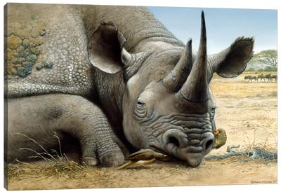Black Rhino Canvas Art Print