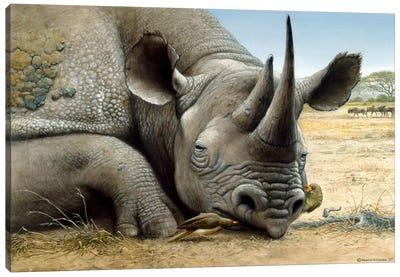 Black Rhino Canvas Art Print