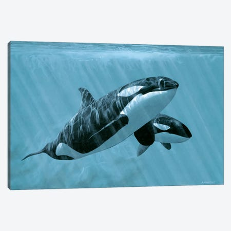 Mother And Son - Orcas Canvas Print #9313} by Ron Parker Canvas Art Print