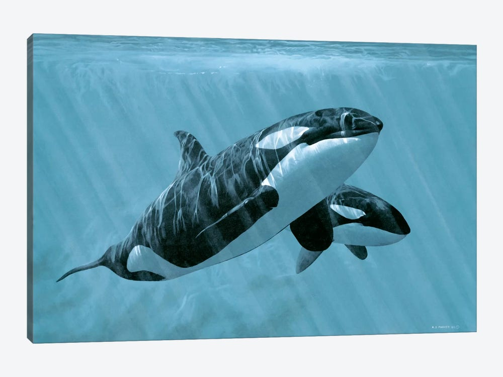 Mother And Son - Orcas by Ron Parker 1-piece Canvas Art Print