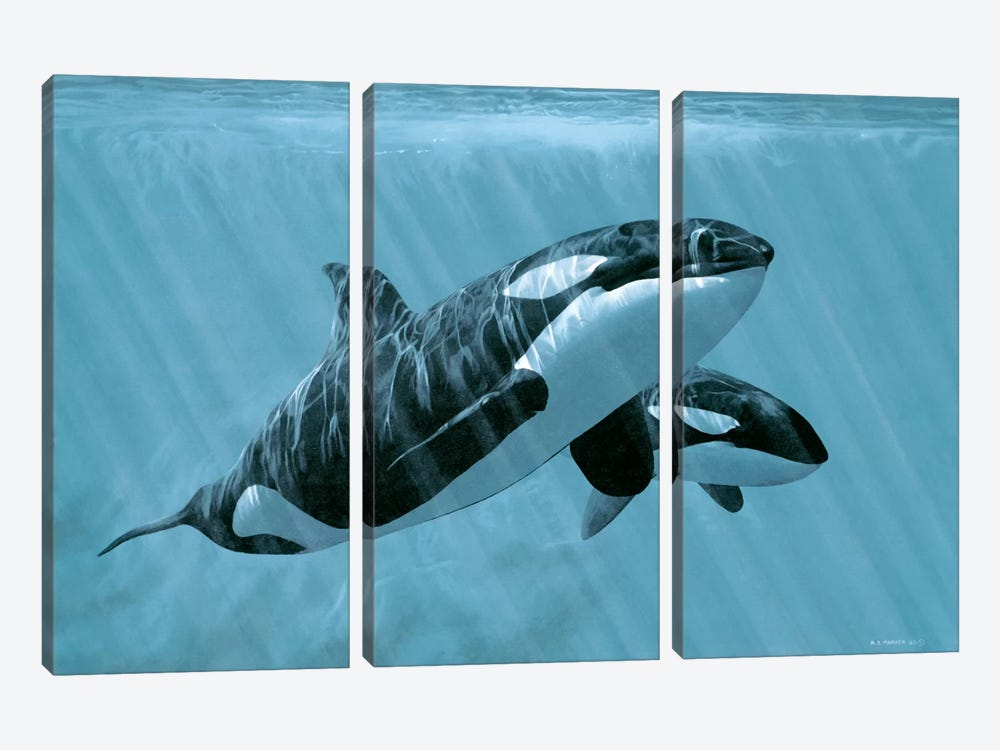 Mother And Son - Orcas by Ron Parker 3-piece Canvas Print