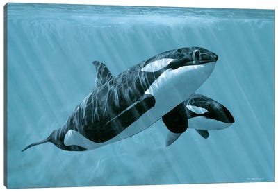 Mother And Son - Orcas Canvas Art Print