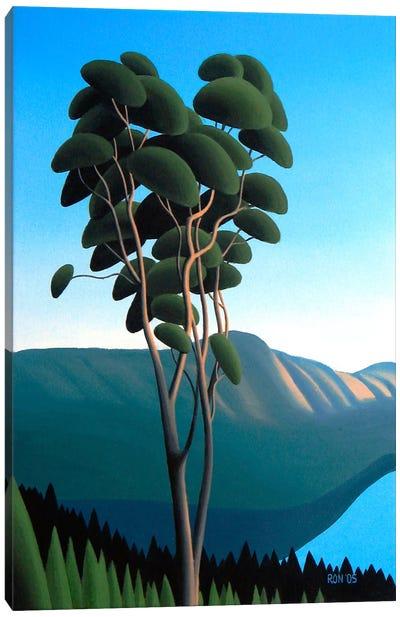 Hillside Arbutus Canvas Art Print