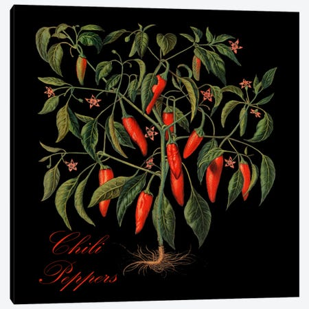 Chili Peppers Canvas Print #9333} by Mindy Sommers Canvas Print