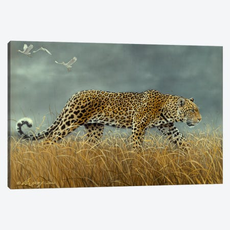 Leopard 2 Canvas Print #9345} by Harro Maass Canvas Print