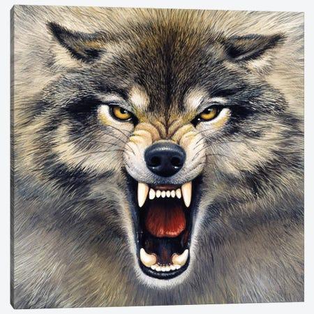 Wolf Canvas Print #9346} by Harro Maass Canvas Art Print