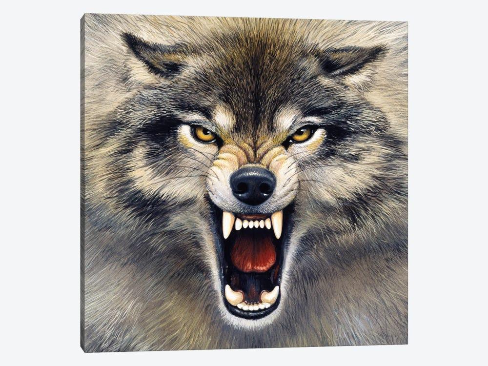 Wolf by Harro Maass 1-piece Canvas Print