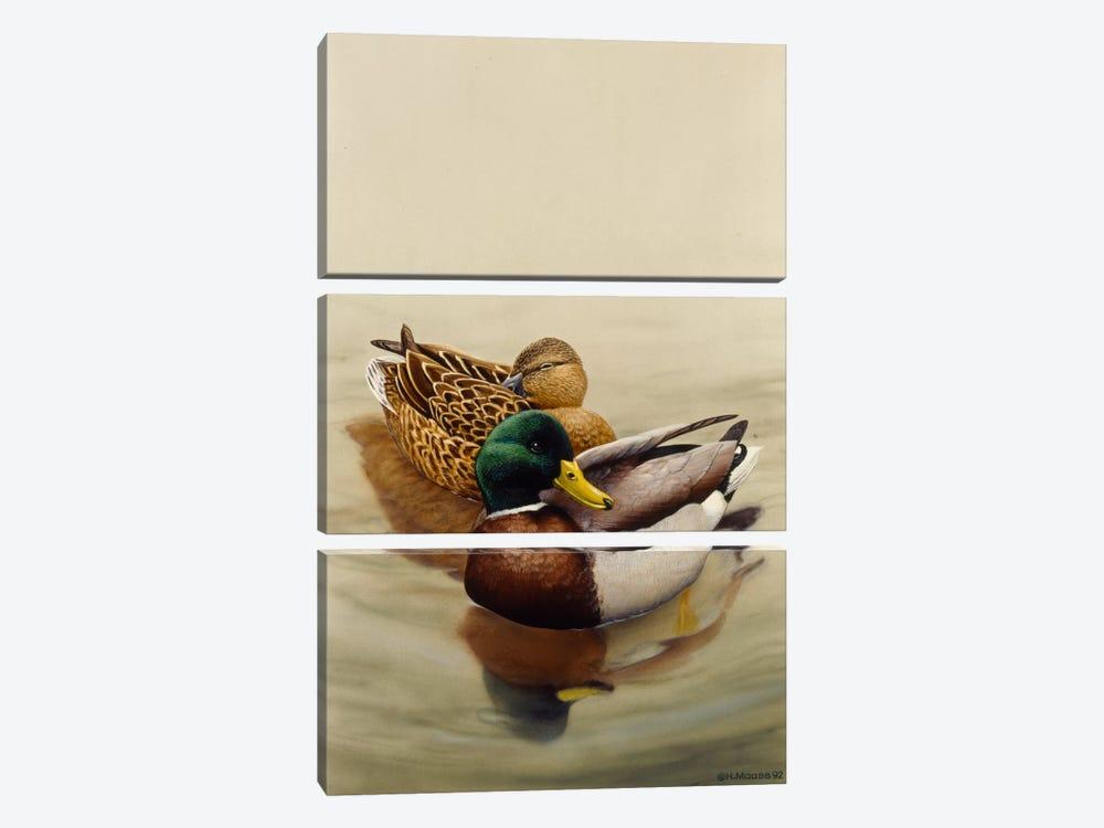 Mallard by Harro Maass 3-piece Canvas Art Print