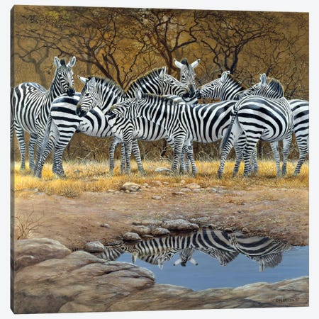 Zebras Canvas Print #9349} by Harro Maass Canvas Art