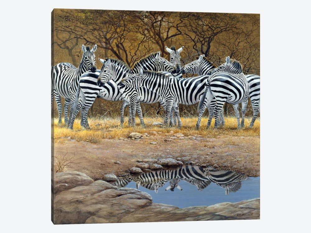 Zebras by Harro Maass 1-piece Canvas Art