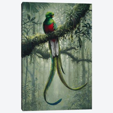 Resplendent Quetzal 2 Canvas Print #9351} by Harro Maass Canvas Art Print