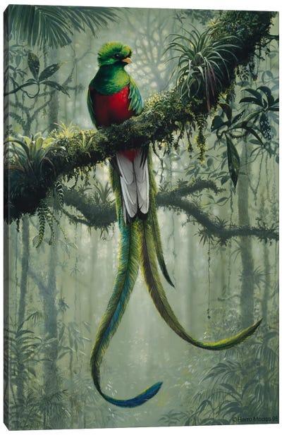 Resplendent Quetzal 2 Canvas Art Print
