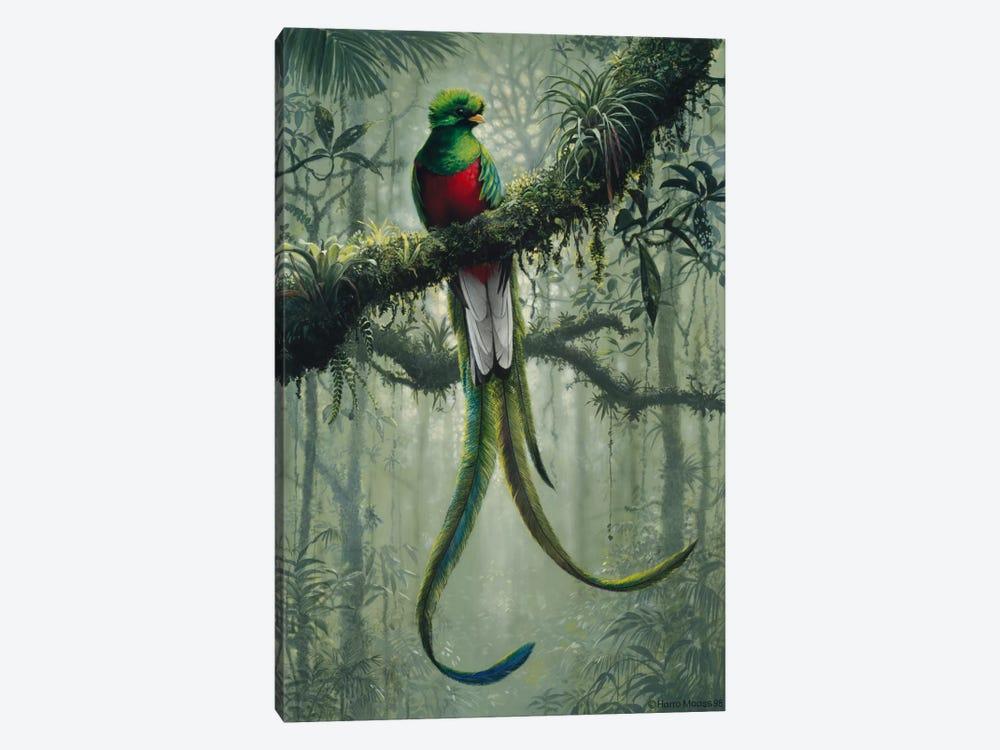 Resplendent Quetzal 2 by Harro Maass 1-piece Canvas Print