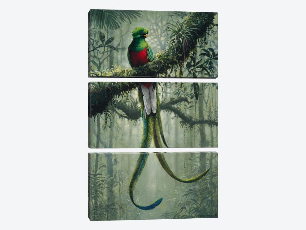 Resplendent Quetzal 2 by Harro Maass 3-piece Canvas Print