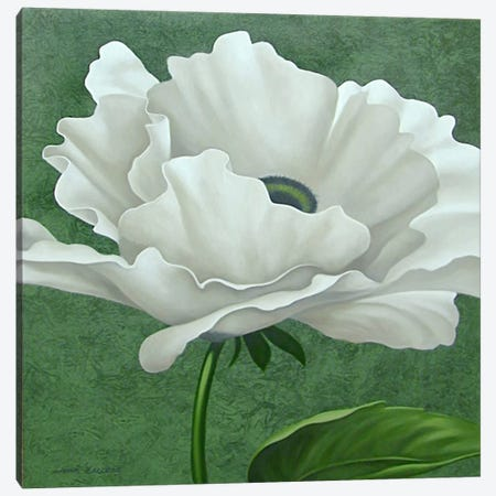 White Poppy Canvas Print #9365} by John Zaccheo Canvas Art Print