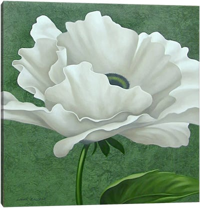 White Poppy Canvas Print #9365