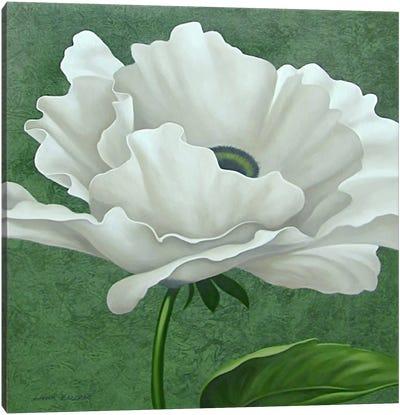 White Poppy Canvas Print #9365