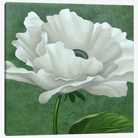 White Poppy Canvas Print #9365} by John Zaccheo Canvas Art Print