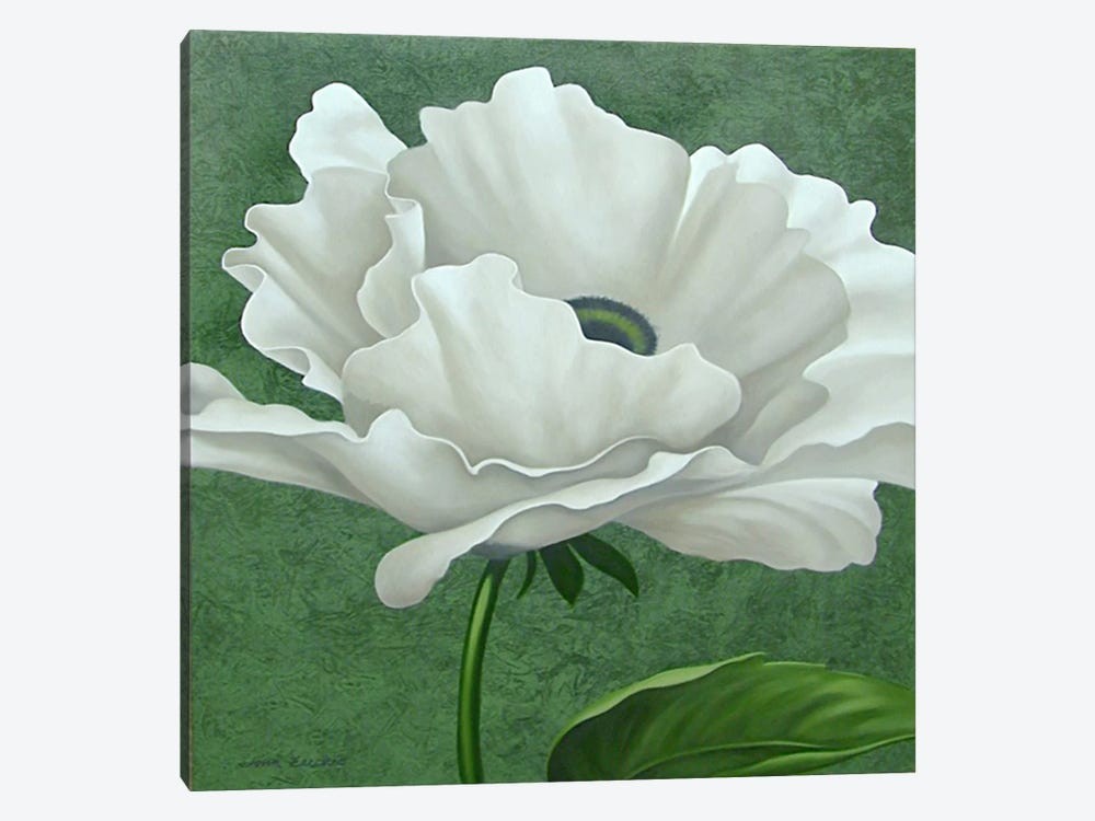 White Poppy by John Zaccheo 1-piece Canvas Wall Art
