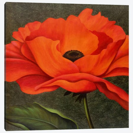 Red Poppy Canvas Print #9366} by John Zaccheo Canvas Print
