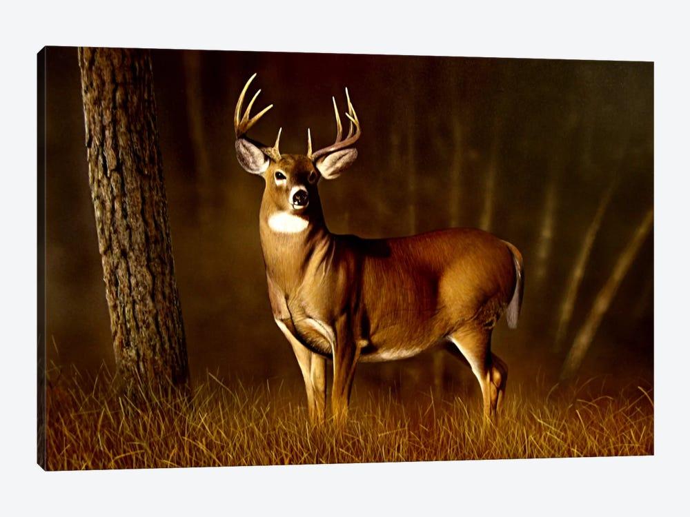 Whitetail Buck by Clarence Stewart 1-piece Canvas Art