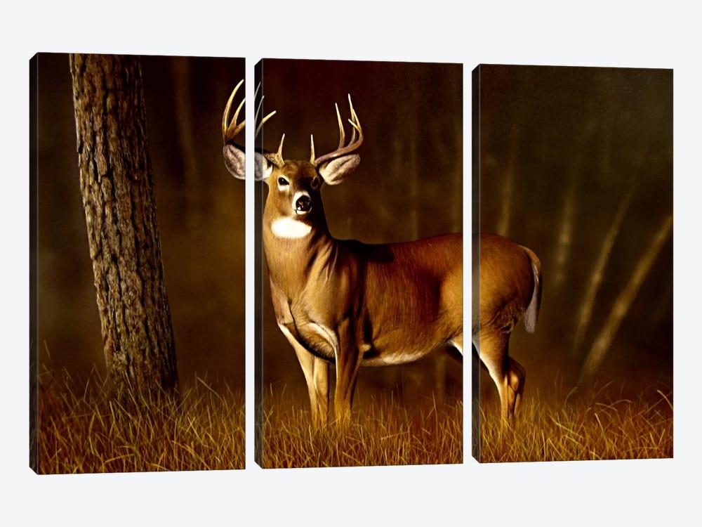 Whitetail Buck by Clarence Stewart 3-piece Canvas Art