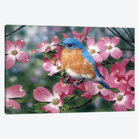 Bluebird/Pink Dogwood Canvas Print #9377} by William Vanderdasson Canvas Art