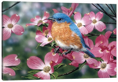 Bluebird/Pink Dogwood Canvas Art Print