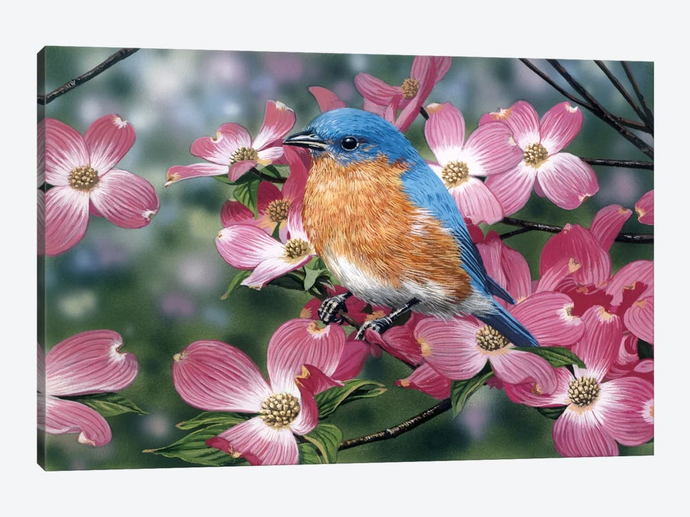 Bluebird/Pink Dogwood by William Vanderdasson 1-piece Canvas Print