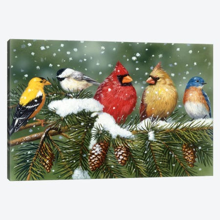 Backyard Birds on Snowy Branch Canvas Print #9378} by William Vanderdasson Art Print