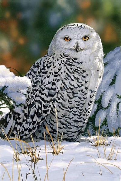 Snowy Owl Canvas Wall Art By William Vanderdasson Icanvas
