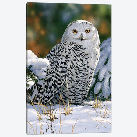 Snowy Owl Canvas Print #9379} by William Vanderdasson Canvas Art Print