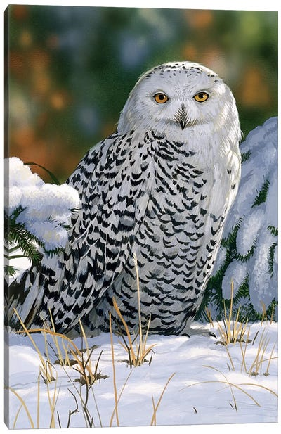 Snowy Owl by William Vanderdasson Canvas Art Print