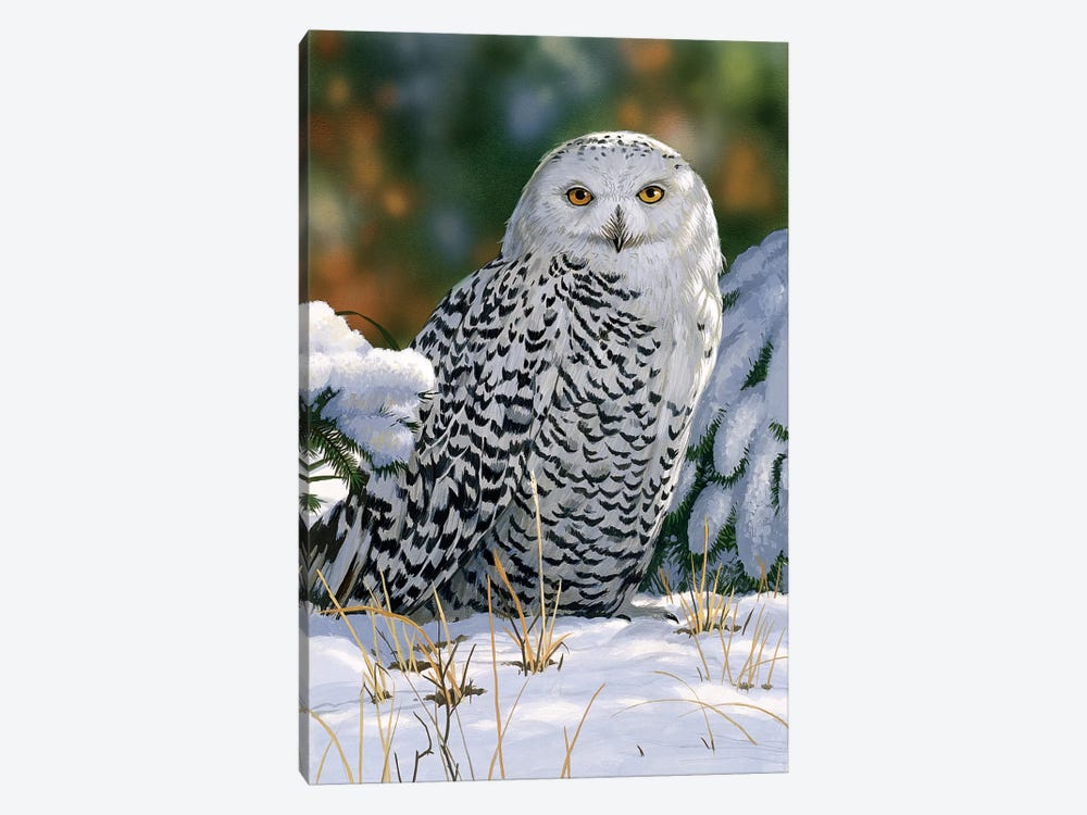 Snowy Owl by William Vanderdasson 1-piece Art Print