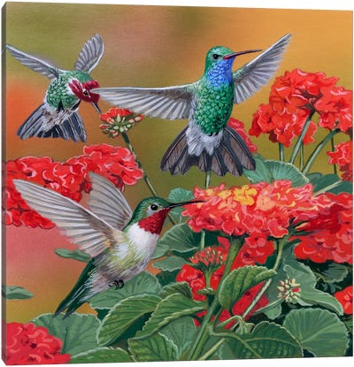 Hummingbirds & Flowers Canvas Art Print