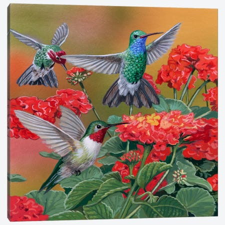 Hummingbirds & Flowers Canvas Print #9381} by William Vanderdasson Canvas Artwork