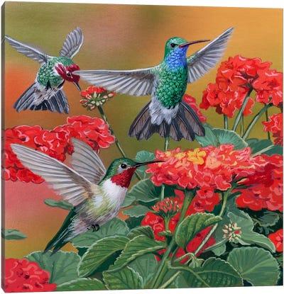 Hummingbirds & Flowers Canvas Art Print