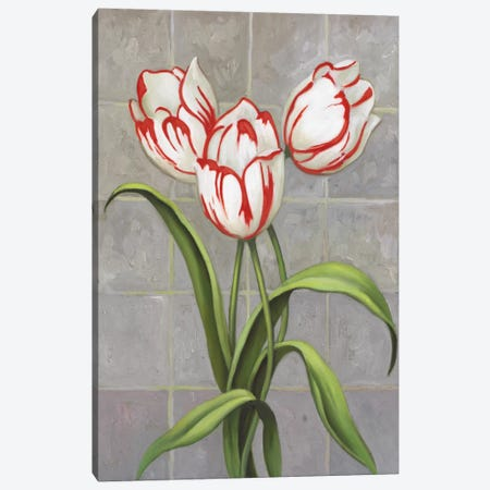 Red-Striped Tulips Canvas Print #9418} by John Zaccheo Canvas Art