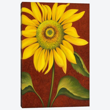 Sunflower Canvas Print #9426} by John Zaccheo Canvas Art