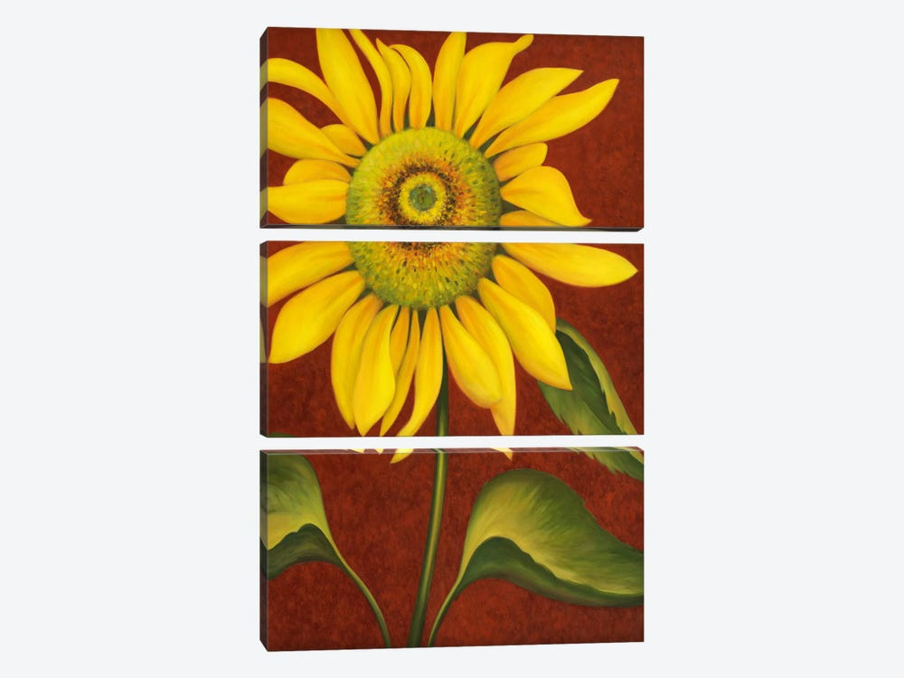 Sunflower by John Zaccheo 3-piece Canvas Artwork