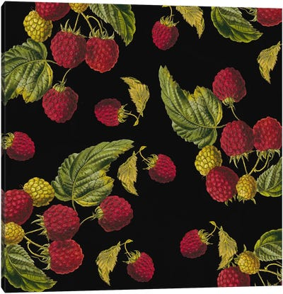 Nature's Bounty - Raspberries Canvas Art Print