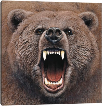Bear 2 Canvas Art Print