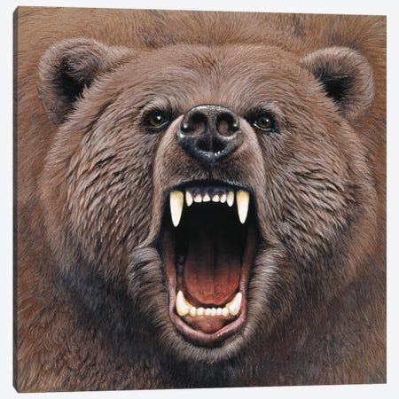 Bear 2 Canvas Print #9566} by Harro Maass Art Print