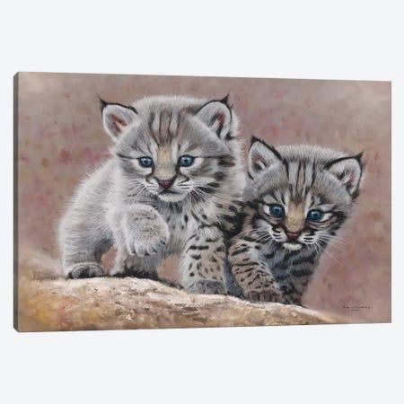 Bobcat Babies Canvas Print #9567} by Pip McGarry Canvas Art Print