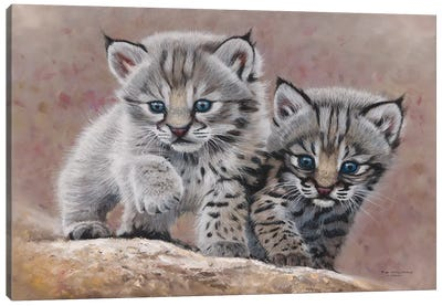 Bobcat Babies Canvas Art Print