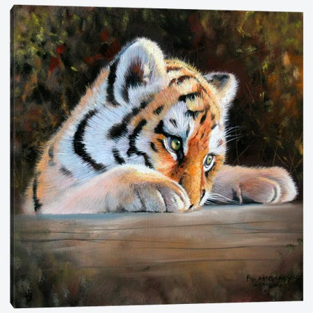 Tiger Cub Face Canvas Print #9568} by Pip McGarry Canvas Art